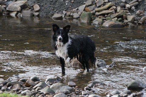 Izzy playing in the river.